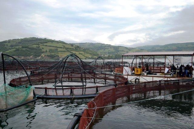 Japonyaya balık ihracatı iki katına çıktı